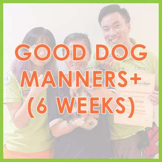 Good Dog Manners+ Class (6 Weeks) - US Certified, AVA-Accredited Force-Free Dog Training by Pawrus Dog Training Academy