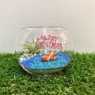 Finding Nemo Christmas Air Plant