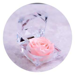 Real Preserved Rose Flower in Crystal Ring Box (4 Colours!)