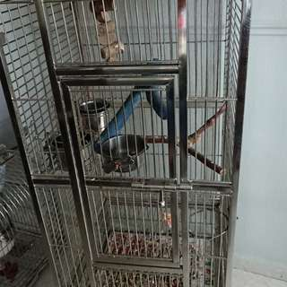 Stainless steel bird cage cheap