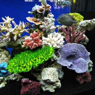 Colourful reef tank
