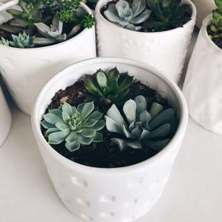 Desert Flourish: Succulents