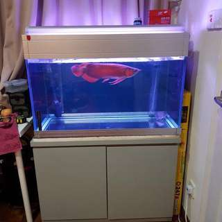 Fish Tank 3feet by 1.5 by 2