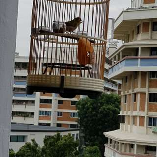 Puteh and cage