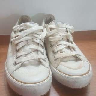 Lacoste ladies shoe