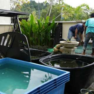 servis fish pond