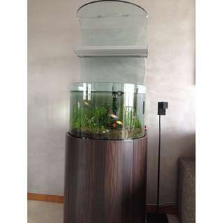 Unique Semi Circular Fish Tank