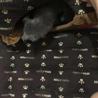 Rumah kucing + bantalan