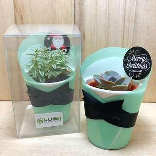 Christmas Day Special! Excellent Gift for all Events Birthday/ Congrats/ Farewell/ House warming/ Event Gifts- Real Plant Succulents/ Cactus Mini Pots