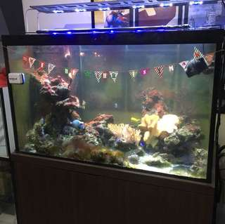 Fish Tank 4ft By 2.5ft By 2ft Salt Water