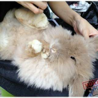 Professional Rabbit Grooming @Ur Home