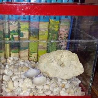 """Mini Aquarium 7x6"""""""