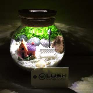Perfect Gift for Christmas/ Xmas/ Birthday/ Congrats/ Farewell/ House warming/ - Real Moss Plant Terrarium with Light