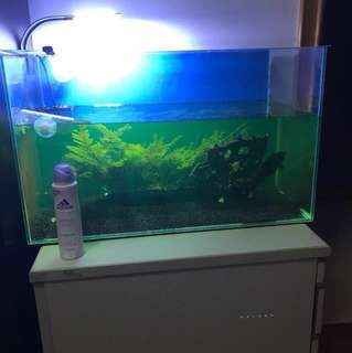 Fish tank: 2ft with filter and lights