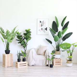 PO/IN STOCK Artificial Plants