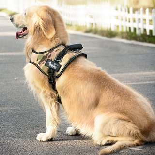 Pet Harness and leash set - different size