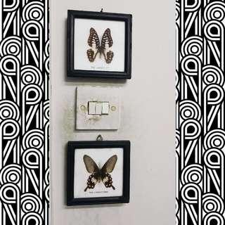 Butterfly Specimen Souvenir Set