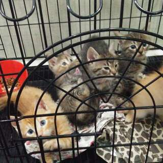 5 Mix Breed Kittens(2 Female & 3 Male)