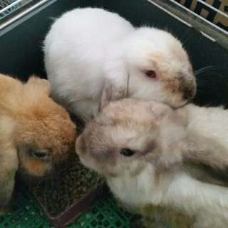 Looking for a new home for the rabbits