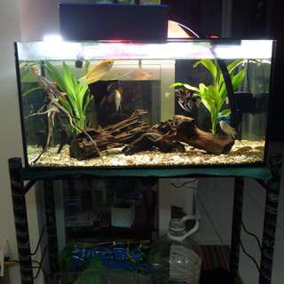Aquarium with stand, fish, filter and decorations