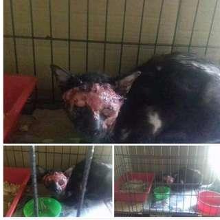 Open Donation for Sporo Case