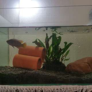 Fish Tank 40cm (L) x 25cm (W) × 26cm (H) with fishes & accessories