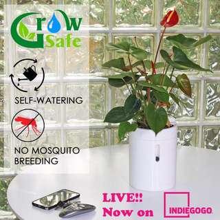 Self watering, design plant pots!