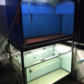 2 tier 4ft fish tank
