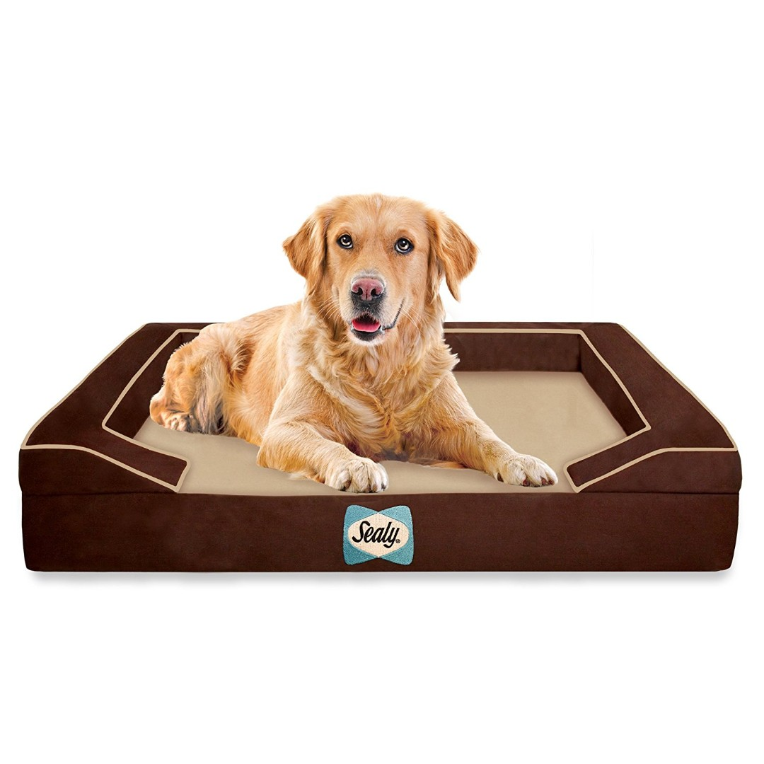 reviews luxury wayfair microfiber foam buddy pdx dog beds pet memory with bed cover