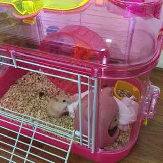 老鼠籠子(內附滾輪、飲水器、小窩、食物盆)