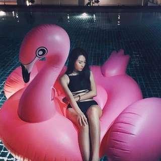 Flamingo swim float for RENT
