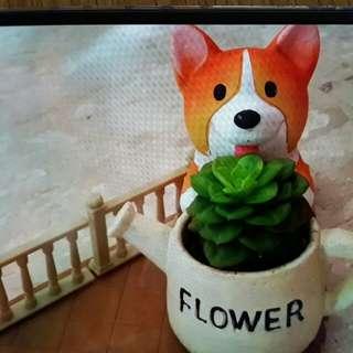 Cute Husky Succulent Plants! X'mas gifts Ideas!!
