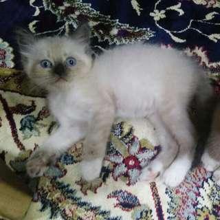 Kittens cat
