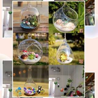 Transparent glass of water cultivated vases flower pots hanging mini garden pot