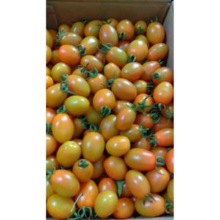 鹽地黃蕃茄 十台斤700元