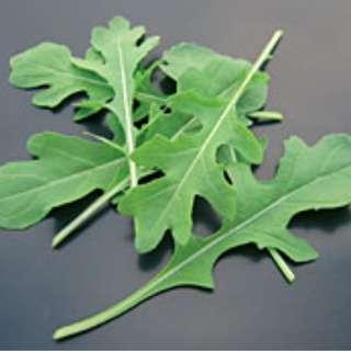 Salad Rocket (Dentellata) Vegetable Seeds