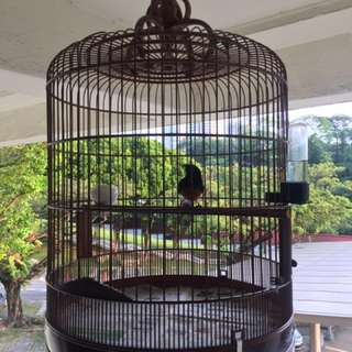 Bird cage 18-inch condition 8/10 Holding a 7-inch semi-Jadi shama.
