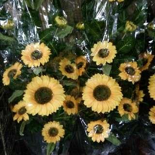 Sunflower 5feet
