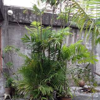 Potted Plants & Trees