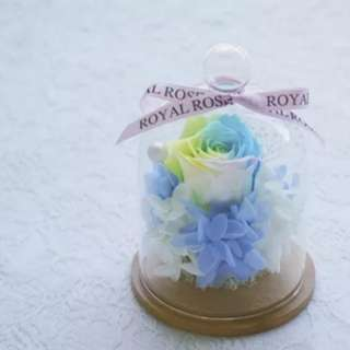 Enchanted Rainbow Color Preserved Rose