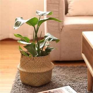 Flower pot Woven Rattan
