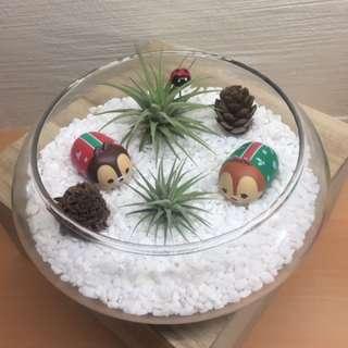 Christmas Airplant Terrarium