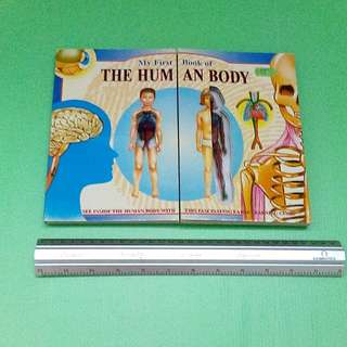 THE HUM AN BODY