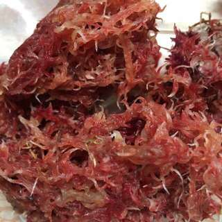 30g of Live Red Sphagnum Moss