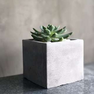 Cement Planter with Succulent 🌱