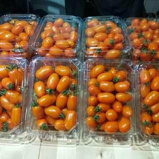 橙蜜香小番茄🍅