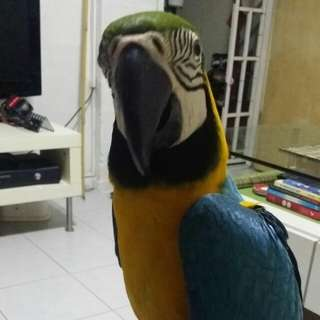 Bng macaw stand