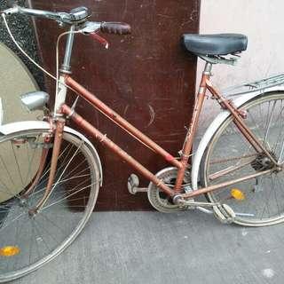 Dusika European bike