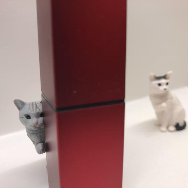 偷偷看 條紋貓