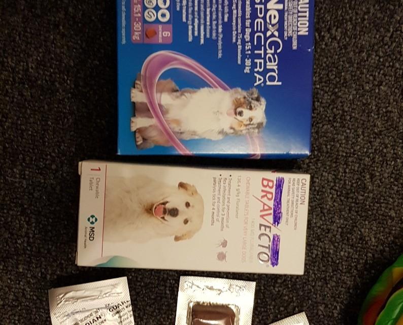 Bravecto Flea/flea prevention treatment